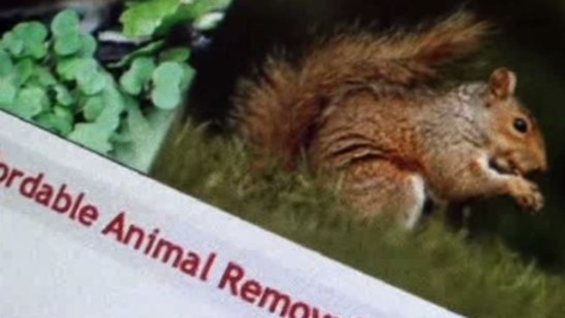 Ruth animal control story_15202428