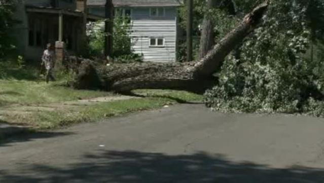Tree crushes van Detroit 1_20958848
