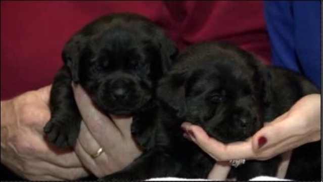 Puppies_17374098