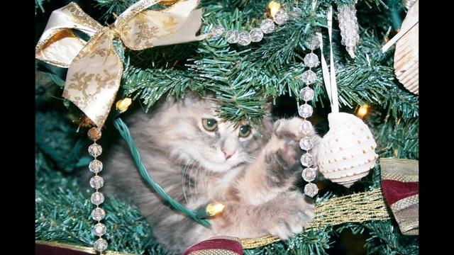 Cat in tree_17865966