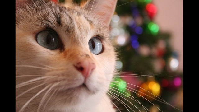 Pets during the holidays_17865796