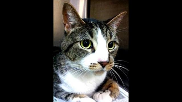 Cody the Cat_18421258