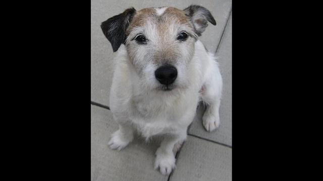 Jack the dog_19295244