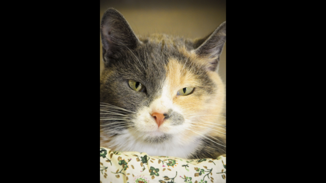 Simmer the cat needs a home
