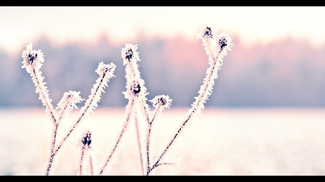 Snow_17833960