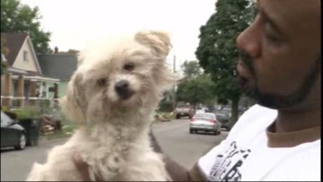 stray-detroit-dog.jpg_21671516
