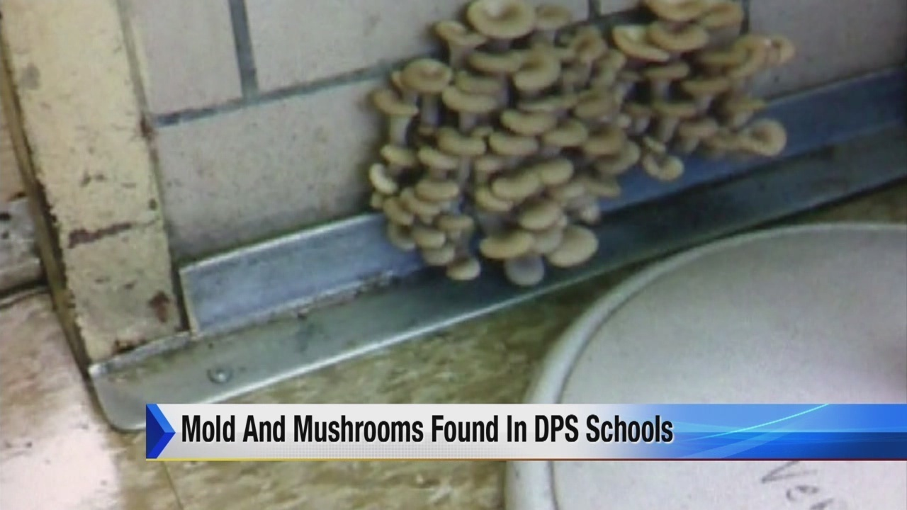 Mold Mushrooms Growing In House