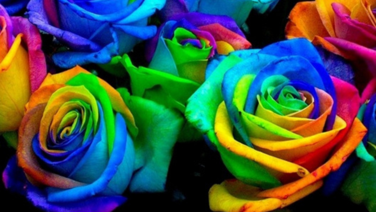 Pin of the week how to make rainbow roses for How to make a multicolored rose