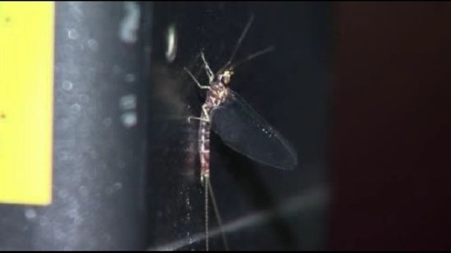 Fishfly explosion caught on radar over Metro Detroit