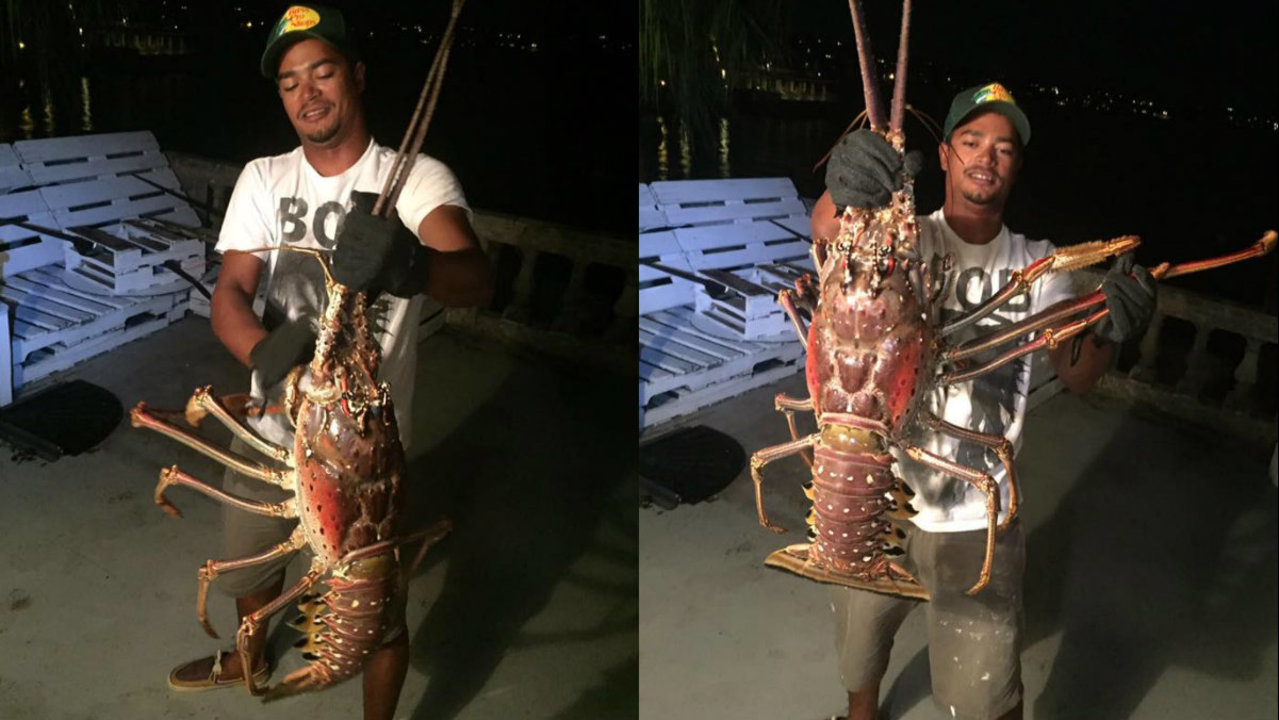 Fisherman discovers giant 14-pound lobster off coast of Bermuda