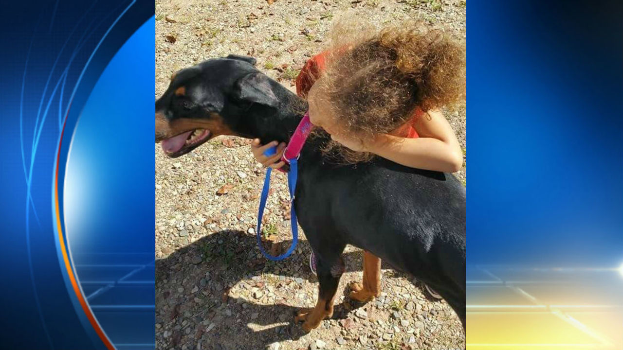 Dog Attacked  Year Old Girl