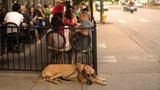 Michigan Senate passes bill to allow dogs on restaurant patios