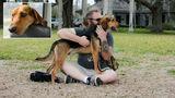 Army veteran graduates from PTSD program with service dog named Harbaugh