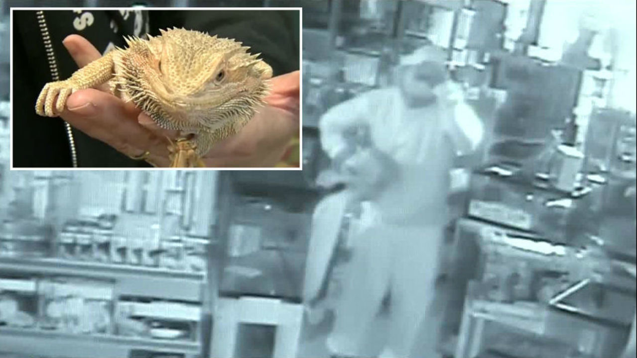 Thousands of dollars worth of reptiles stolen from exotic pet