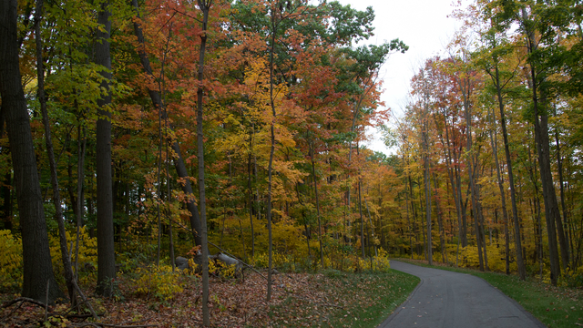 More than 30 Michigan state parks schedule fall festivals: Here's the full list