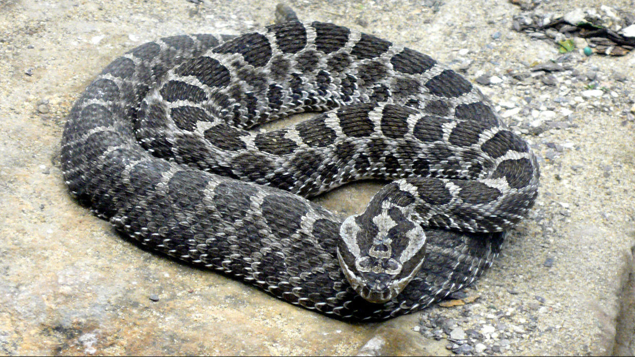 these 17 snakes can be found in michigan