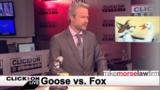 Jason Carr Live: Animals go wild, a comedian roasts Jason, Kangaroo&hellip&#x3b;