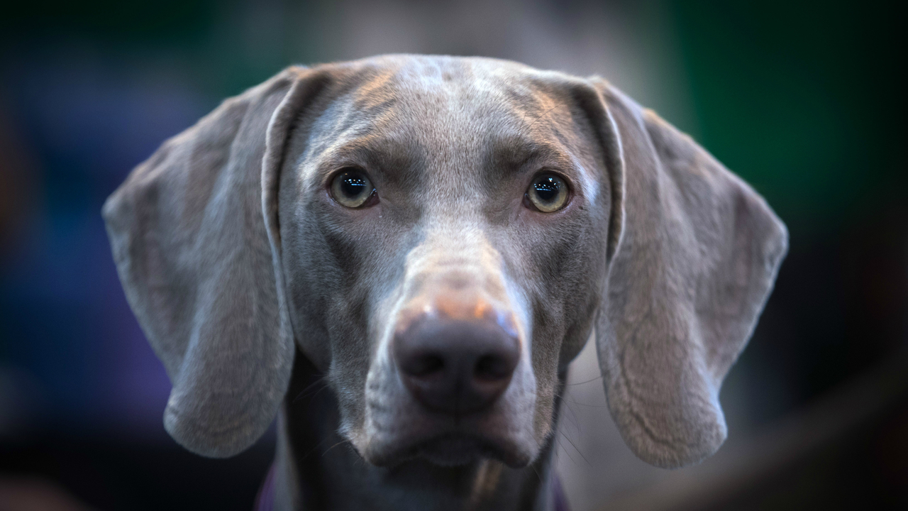 Tips for dealing with storm-induced dog anxiety