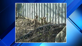 Construction workers find fox family during Michigan demolition