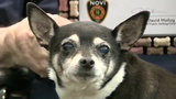 Hero dog honored by first responders in Novi