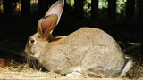 United investigates report that giant rabbit died on flight