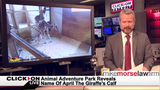 Jason Carr Live: April the giraffe's new name, woman's pizza ruined, cat rescue