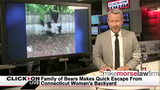 Jason Carr Live: Family of bears climb privacy fence, most awkward high&hellip&#x3b;