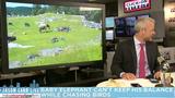 Jason Carr Live: Baby elephant chasing birds, giant cobra,&hellip&#x3b;