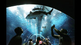 Q&A: Afraid of sharks? Flu, asteroids pose far greater risk