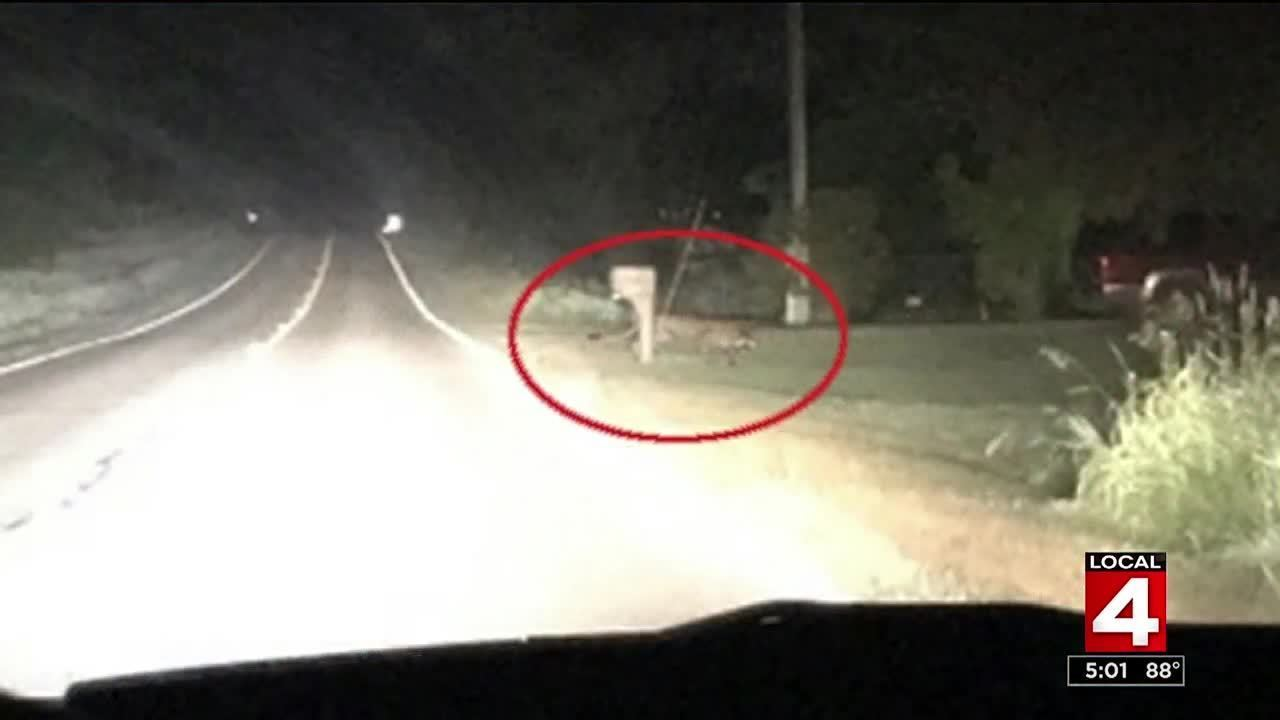 dnr confirms first ever cougar sighting in michigan u0026 39 s lower