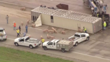 VIDEO: Texas freeway closed after overturned truck spills pigs on road