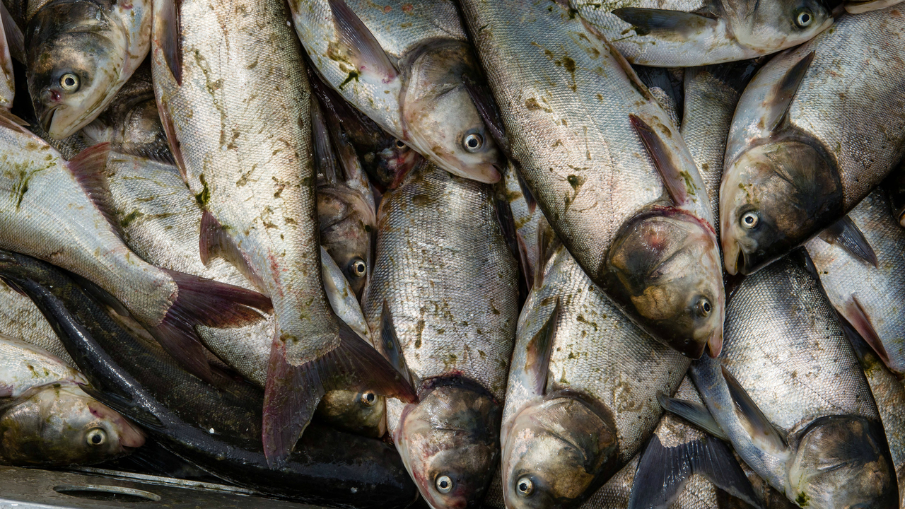 Michigan DNR: St. Joseph, Kalamazoo rivers test clean for Asian carp