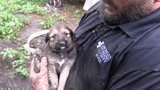 WATCH: Michigan Humane Society rescues 11 puppies from Detroit yard