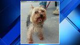 Lost dog found on Ardmore Street in Detroit