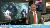 Jason Carr Live: Selfie disaster, bull stuck in tire, lioness adopts&hellip&#x3b;