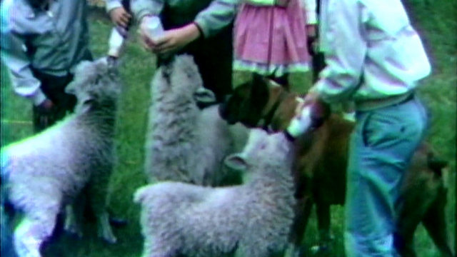 Lamb GV_1500302161332.jpg