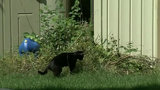 Feral cats multiply, but Metro Detroit neighborhood has plan