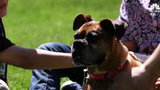 Family discovers their dog is alive after paying vet to euthanize her