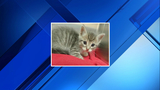 Kitten rescued from sewer after being tossed from car in Ypsilanti