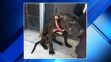 Detroit Dog Rescue searching for people who left dog on side of road