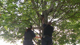 VIDEO: Detroit police officers help woman rescue cat from tree