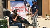 WATCH: Bomb-sniffing military dog reunites with handler after being separated