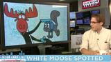 Jason Carr Live: White moose spotted, Bruno Mars helps Flint, Soup Nazi&hellip&#x3b;