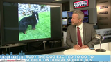 Jason Carr Live: Elephants rescue people from floods, dog excited to go&hellip&#x3b;