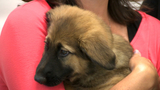 Puppies find homes after being rescued from hole in Detroit by Michigan&hellip&#x3b;