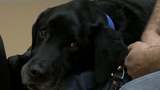 Retired Canadian detector dog battling cancer travels to Metro Detroit&hellip&#x3b;