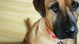How owners can prevent pet suffering by knowing signs