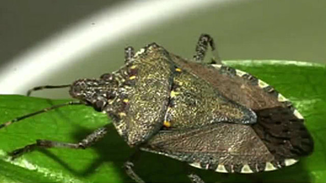 Michigan insecticide spraying could threaten vulnerable bugs