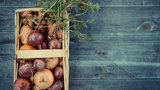 Get your fill of fall flavors at Ann Arbor Farmers Market's Harvest Week