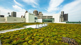 Cobo Center to install observation area near living green roof, new&hellip&#x3b;